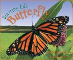 starting life butterfly